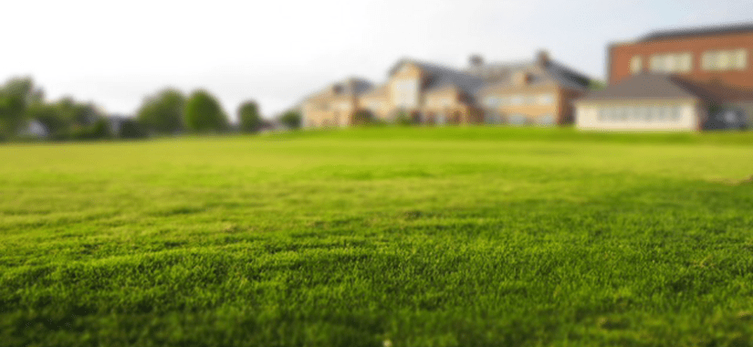 Tips for looking after your grass