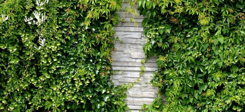 Helping Your Plants Thrive Whichever Way Your Wall Faces