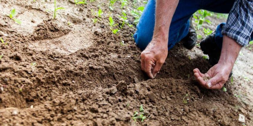 Your Organic Garden's Spring Needs In Full