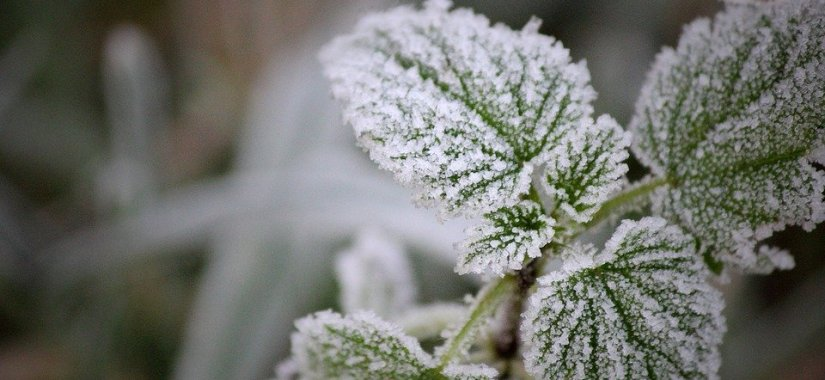 Protect your garden this winter