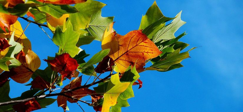 Preparing Your Garden for Autumn