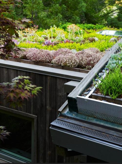 Detalhe do telhado verde, elementos drenantes e ligação com as calhas. (Fonte: Remodelista).