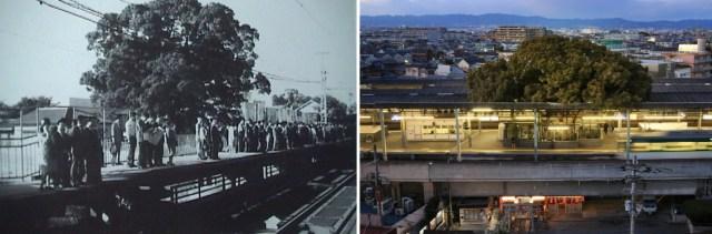 A estação em 1968 e atualmente, com o projeto que englobou a árvore centenária. (Fonte: My Modern Met).
