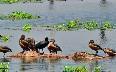 World's Biggest Organic Sewage Management System is in Kolkata