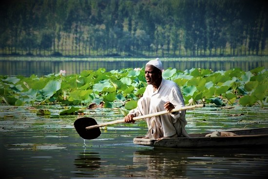 Saving Lake Manasbal: Campaign Starts in Kashmir for Ecology Restoration