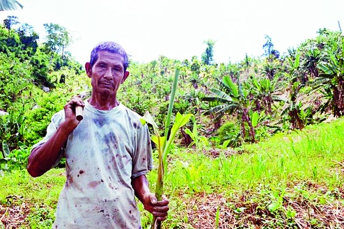 Sustainable farming: Bananas replace shifting cultivation in Meghalaya, India