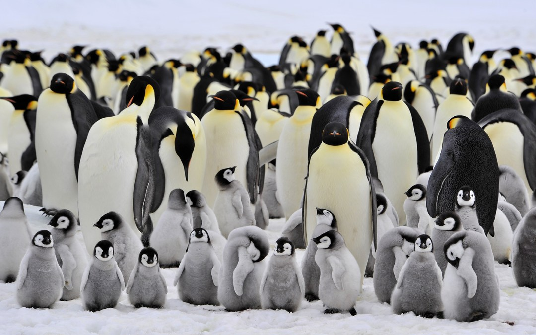 World Penguin Awareness Day: Let's meet the majestic birds before extinction