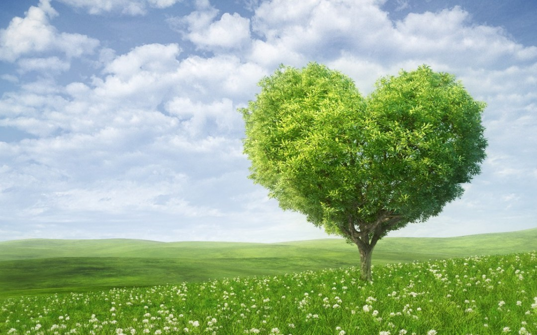 How to enjoy an environment-friendly green Valentine's Day