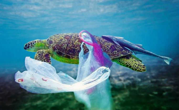 South Africa Plastic Bag Ban Reduces Plastic Use by 90%