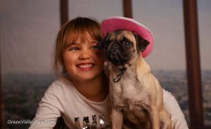 girl and fawn pug with cowboy hat.