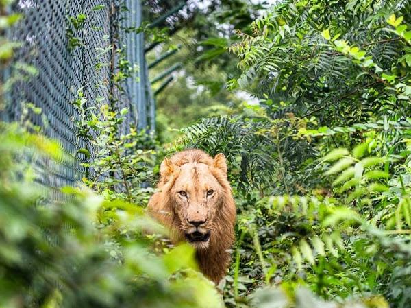 Interaction with Wildlife – Accra Zoological Garden