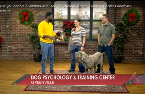 Greenville Dog Training Help on Channel 62 CW