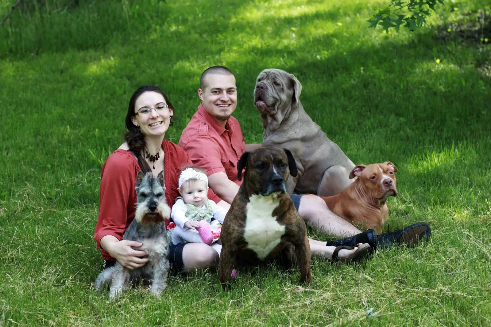 about-greenville-sc-dog-training-center