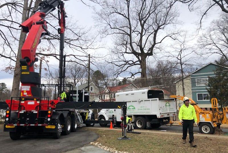 tree removal crane and Green Vista Tree Service truck