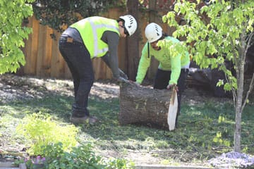tree removal - moving logs