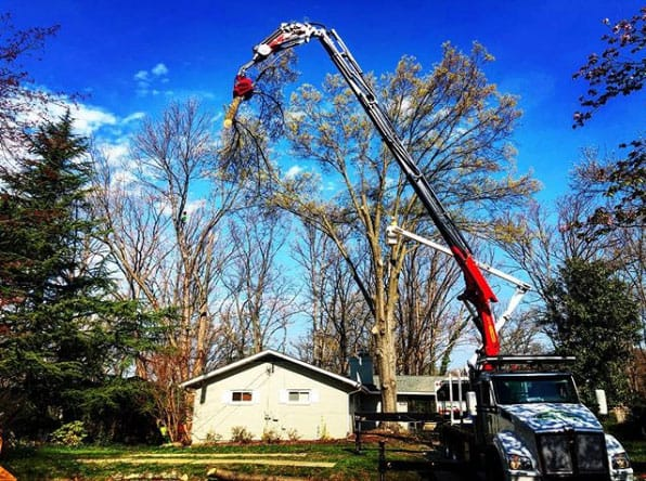 Tree Care Services, Northern VA | Green Vista Tree Care