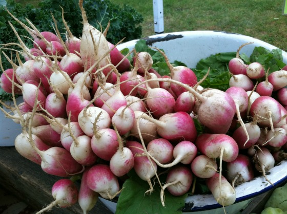 radish portland farmers market maine