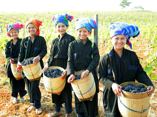 The road to wine in Myanmar