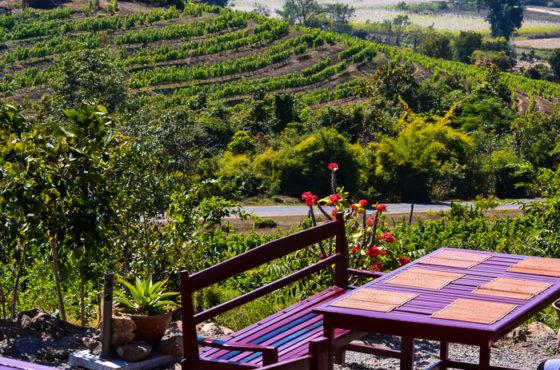 Wine in Myanmar view of vineyards