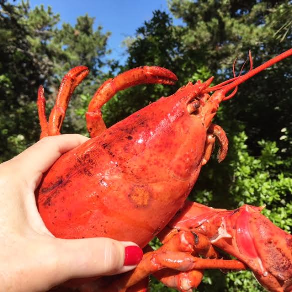 New england summer food festivals lobster