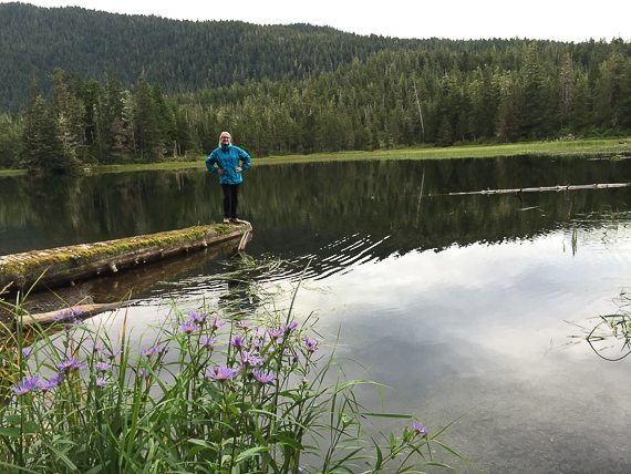 Sitka spruce rainforest eco system
