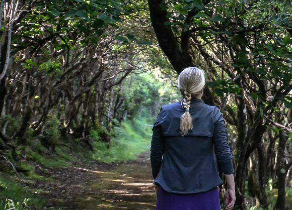 hiking fernbank mountain ga