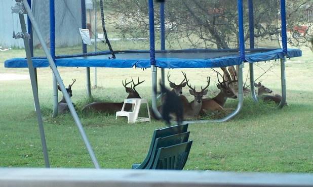 reason-_27-that-trampolines-are-dangerous.jpg