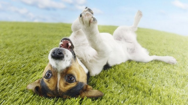 the stinky stuff for dogs