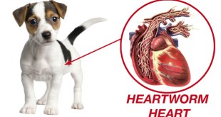 Shelter Scoop: Heartworms