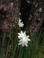 Narcissus everywhere.