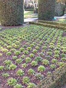 Filoli grows all of its annual color on-site. There is a horticulturalist who specializes just in propagating, managing the Filoli greenhouse.