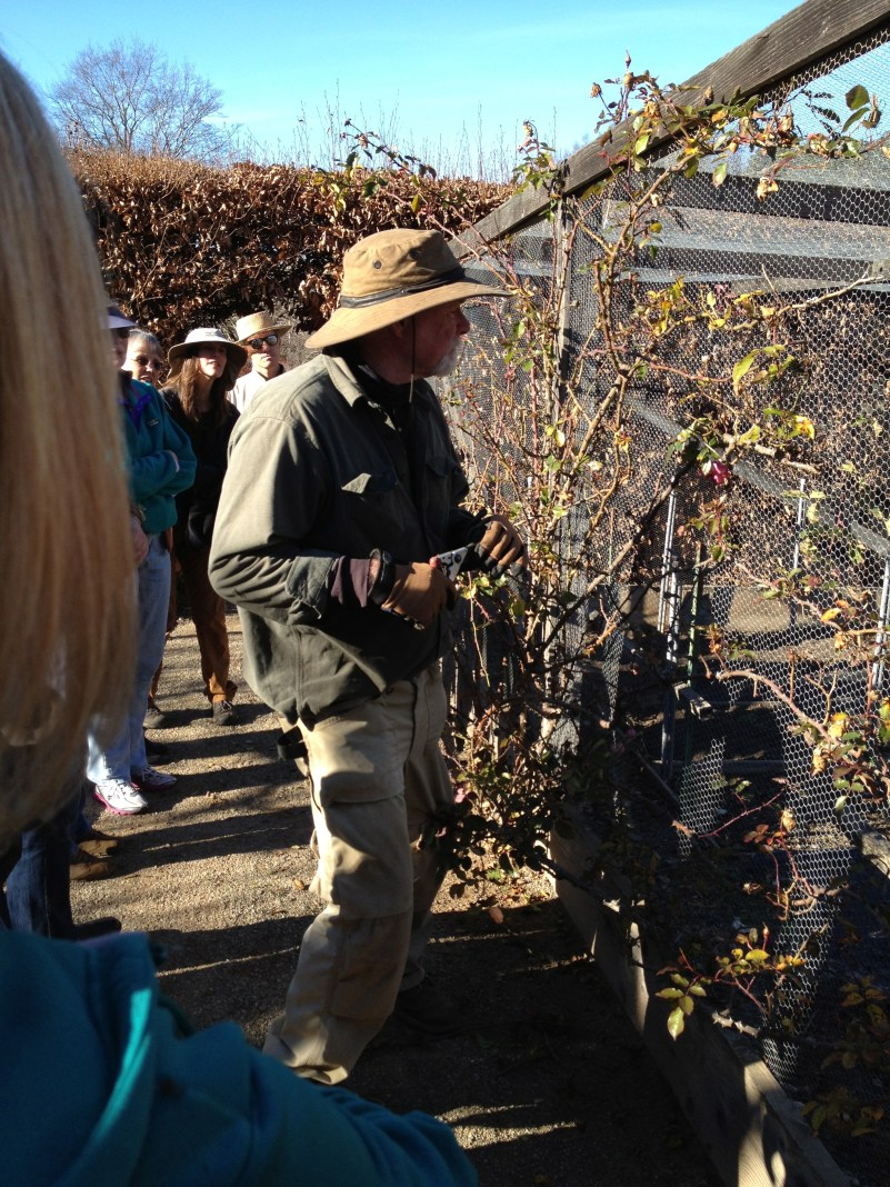 A horticulturist demonstrates methods for climbing roses. Lots of talk about basal breaks and bud scars. Yay!