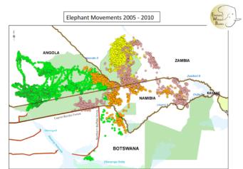 elephantmovementsbotswana2005-10