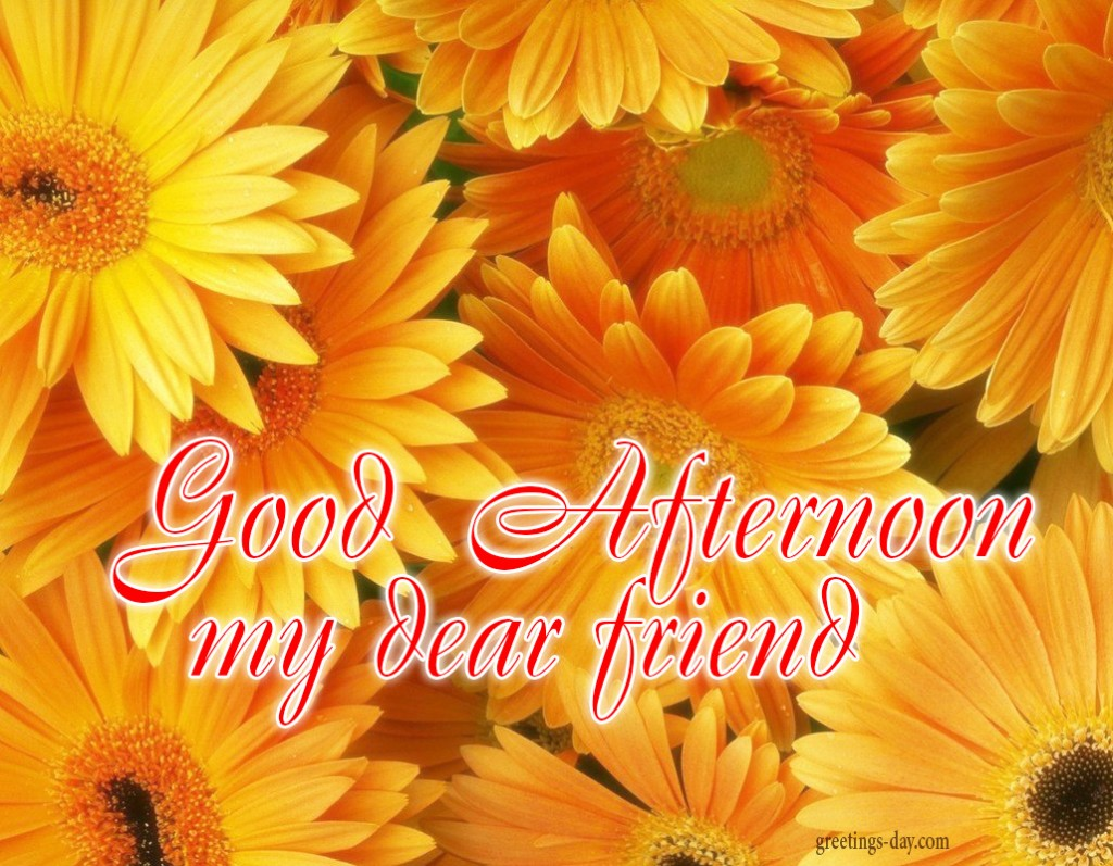 Good Afternoon Free Pictures Photos Amp Wishes