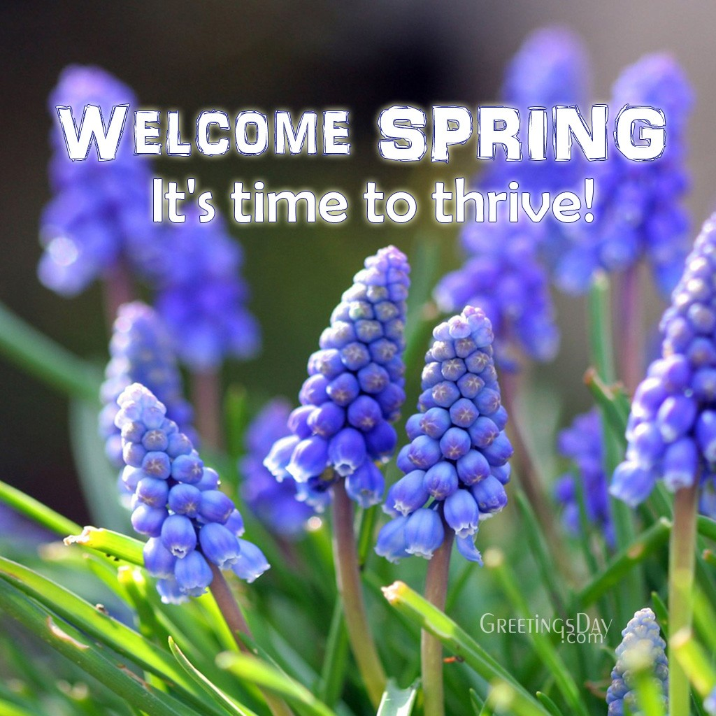 Welcome Spring Online Cards Animated Pics Amp Quotes