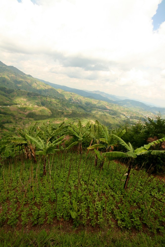 I fear I am falling in love with Rwanda. (5/6)