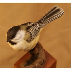 Jeffrey Moores Song Birds