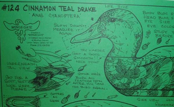 Cinnamon Teal Drake, Decoy, Life