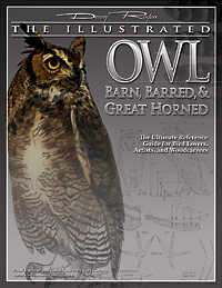 Illustrated Owl: Barn, Barred & Great Horned: