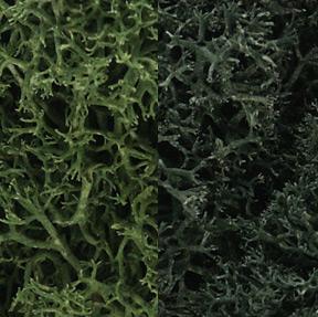 Lichen - Dark Green Mix