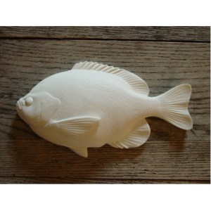 """Bluegill Fish Study Cast 9"""" by Clark Schreibeis"""