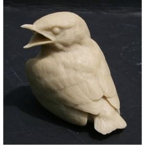Bluebird, baby birds - by R. Martin study cast