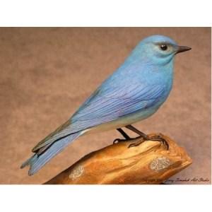 Bluebird, Mountain  Male, Jerry Simchuk study cast