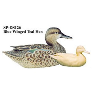 Blue-winged Teal, Hen, Study Cast