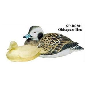 Oldsquaw, Hen, Study Cast