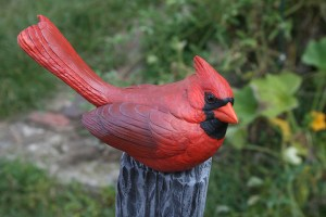 Cardinal tupelo Roughout TAIL UP  Head turned