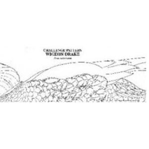 Pat Godin, Canvasback Hen - Forward swimming motion