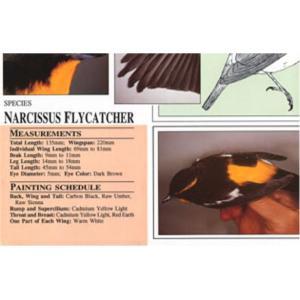 Harou Uchiyama Songbird Patterns Narcissus Flycatcher