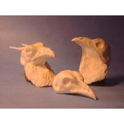 Study Bird Heads by Tony Finazzo