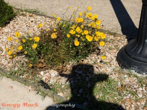 20130223_Neighborhood_Walk_121